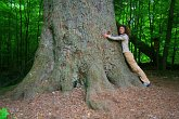 Giant trees in the Bavarian Forest National Park